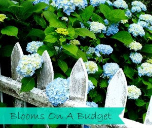 Blooms On A Budget