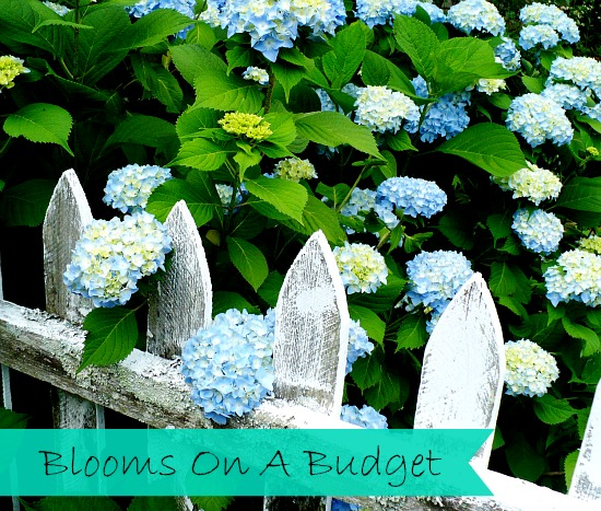 Thrifty Gardening tips