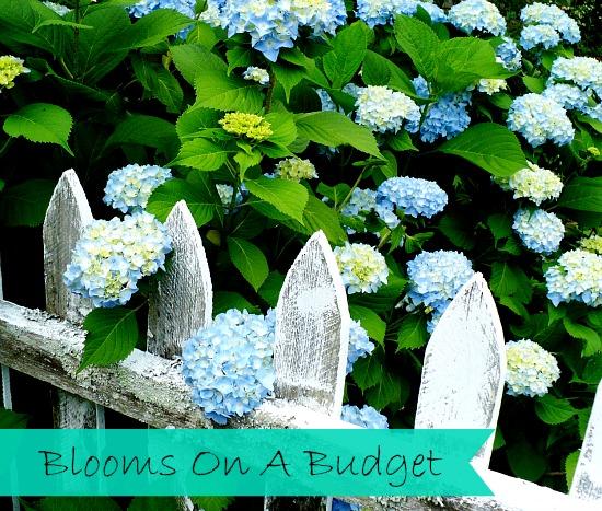 Thrifty Gardening tips