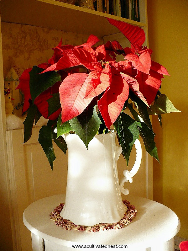 Easy decoration! Put a poinsettia (real or fake) in a pretty white pitcher.