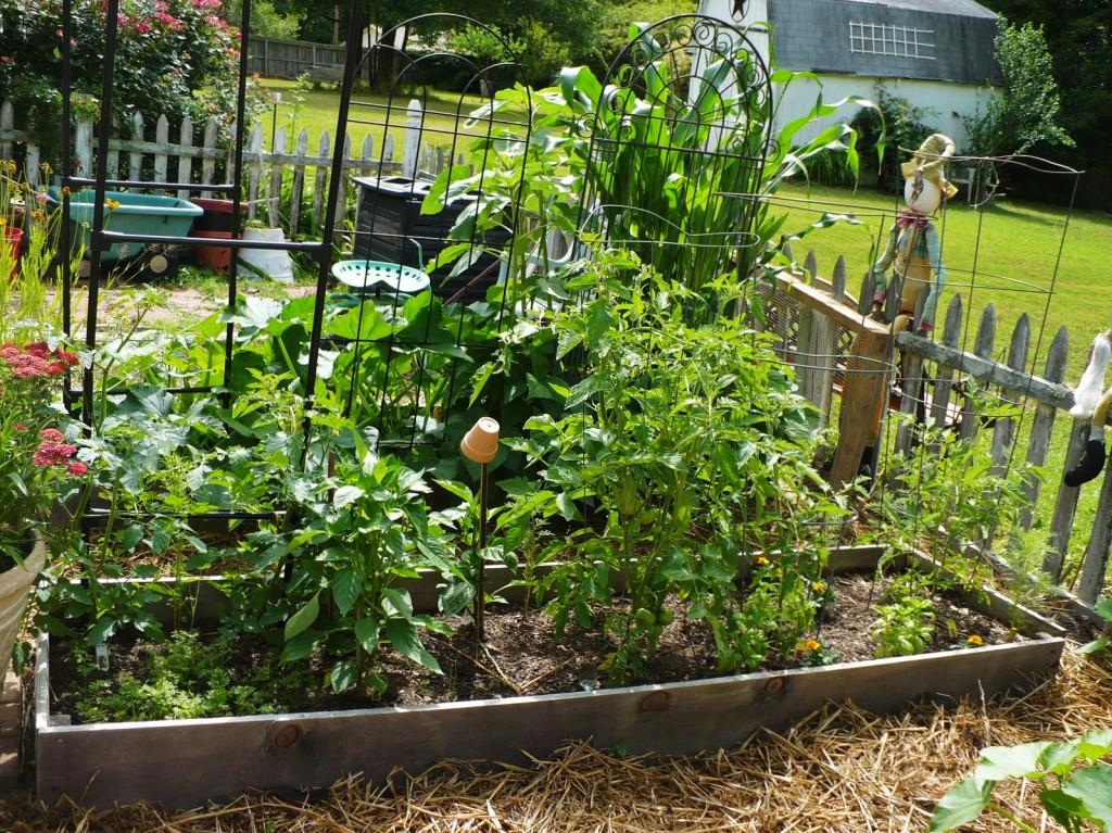 2011 vegetable garden