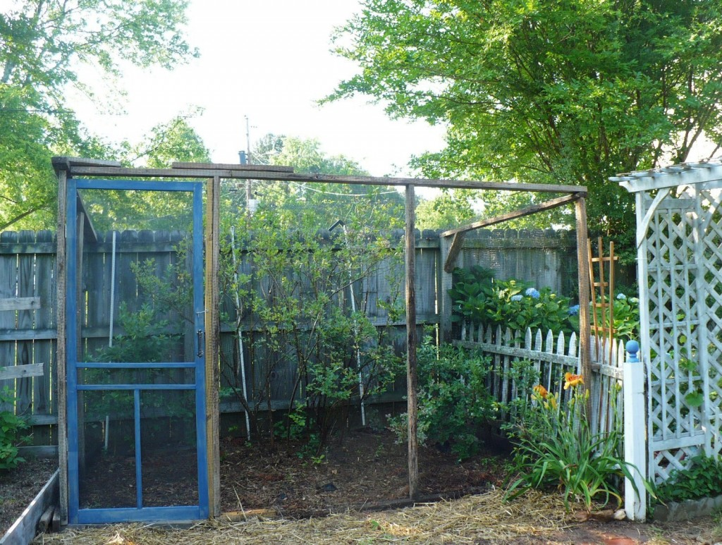 blueberry bush enclosure