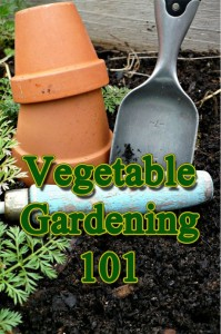 beginner vegetable gardening tips