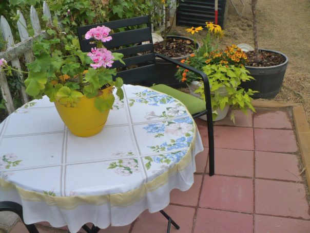 pink geraniums on table