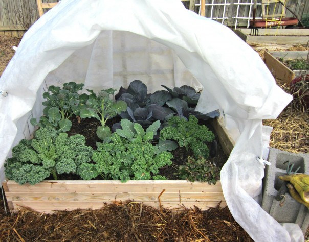 Winter vegetable gardening - using row covers on a raised bed