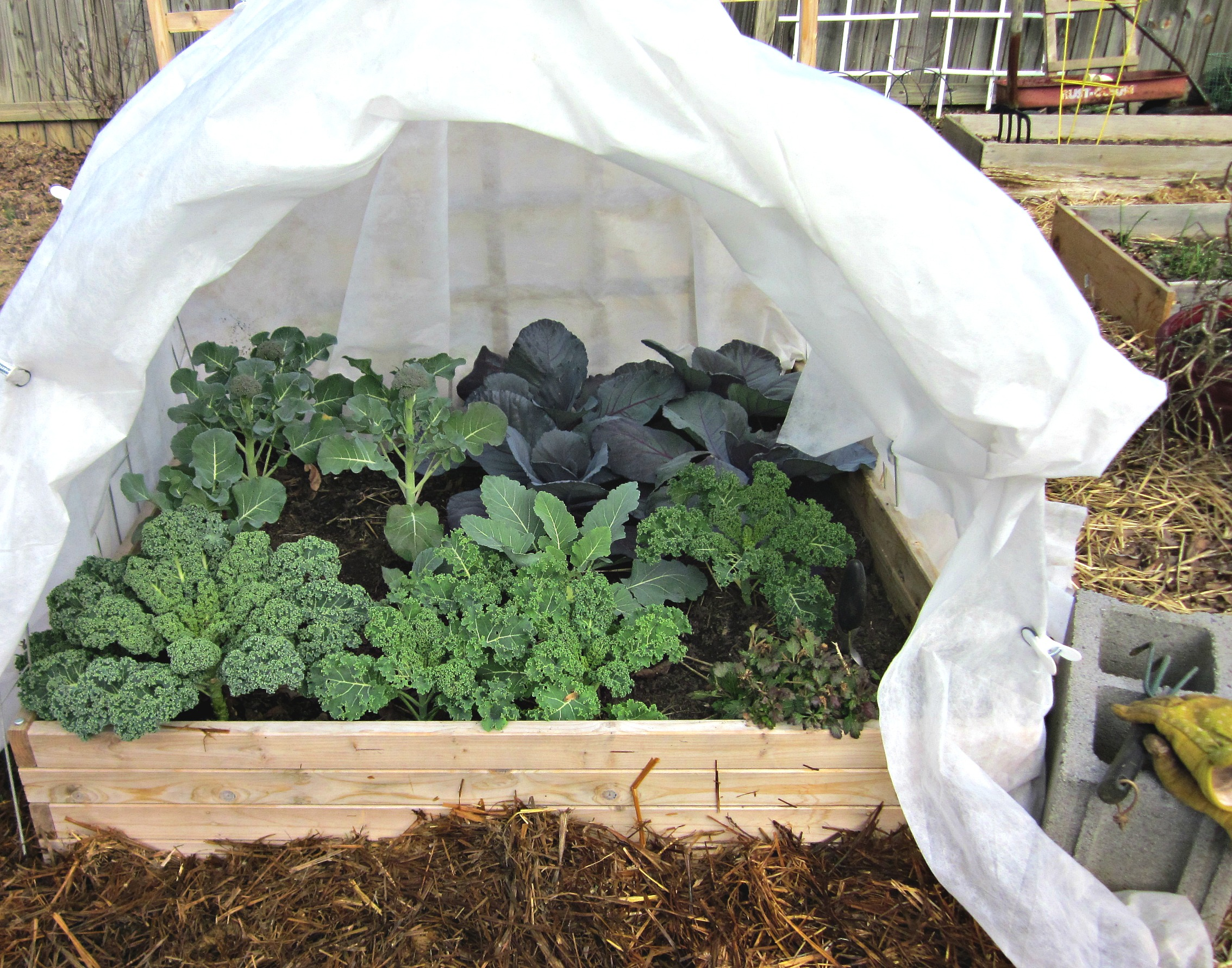 Winter vegetable gardening - Gardening mistakes maintaining garden winter ...
