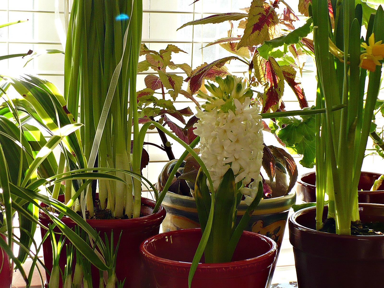 indoor winter blooming garden a cultivated nest