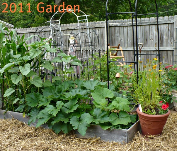 2011 Raised Bed