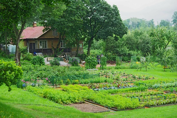 beginners guide to vegetable gardening