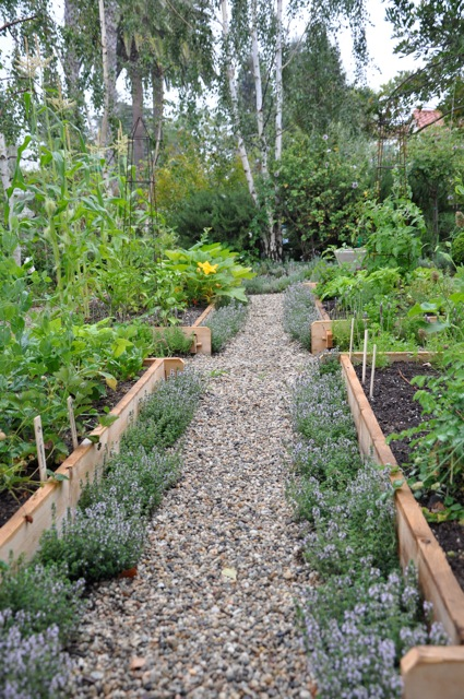 The basics of planning a vegetable garden - a kitchen garden with raised beds