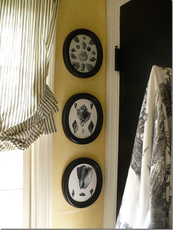 black and white shell prints