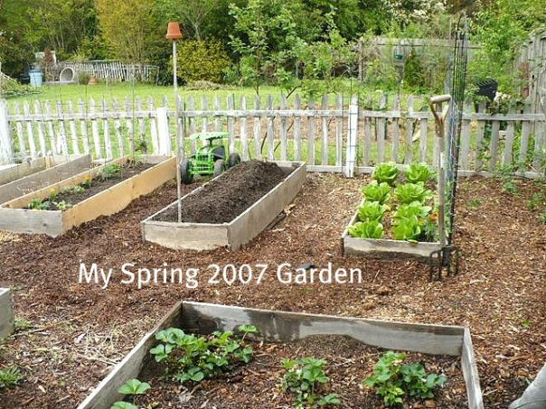 The basics of planning a vegetable garden - raised beds