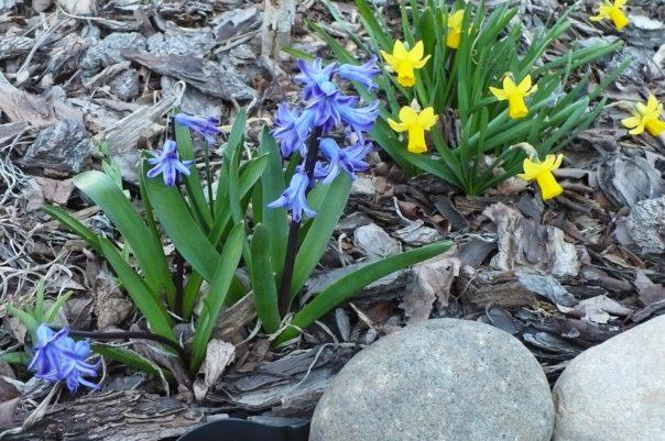 sprint flowers