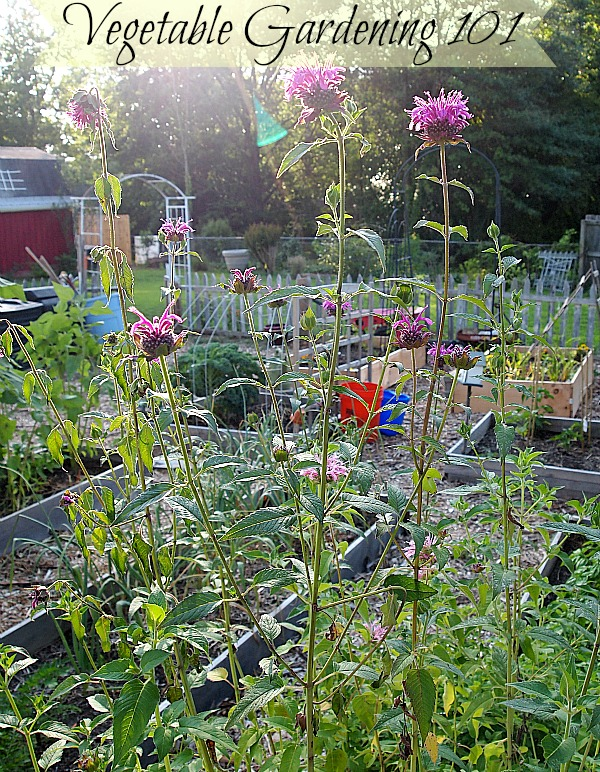 the basic steps for starting a vegetable garden