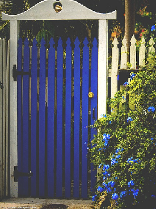 bright blue garden gate