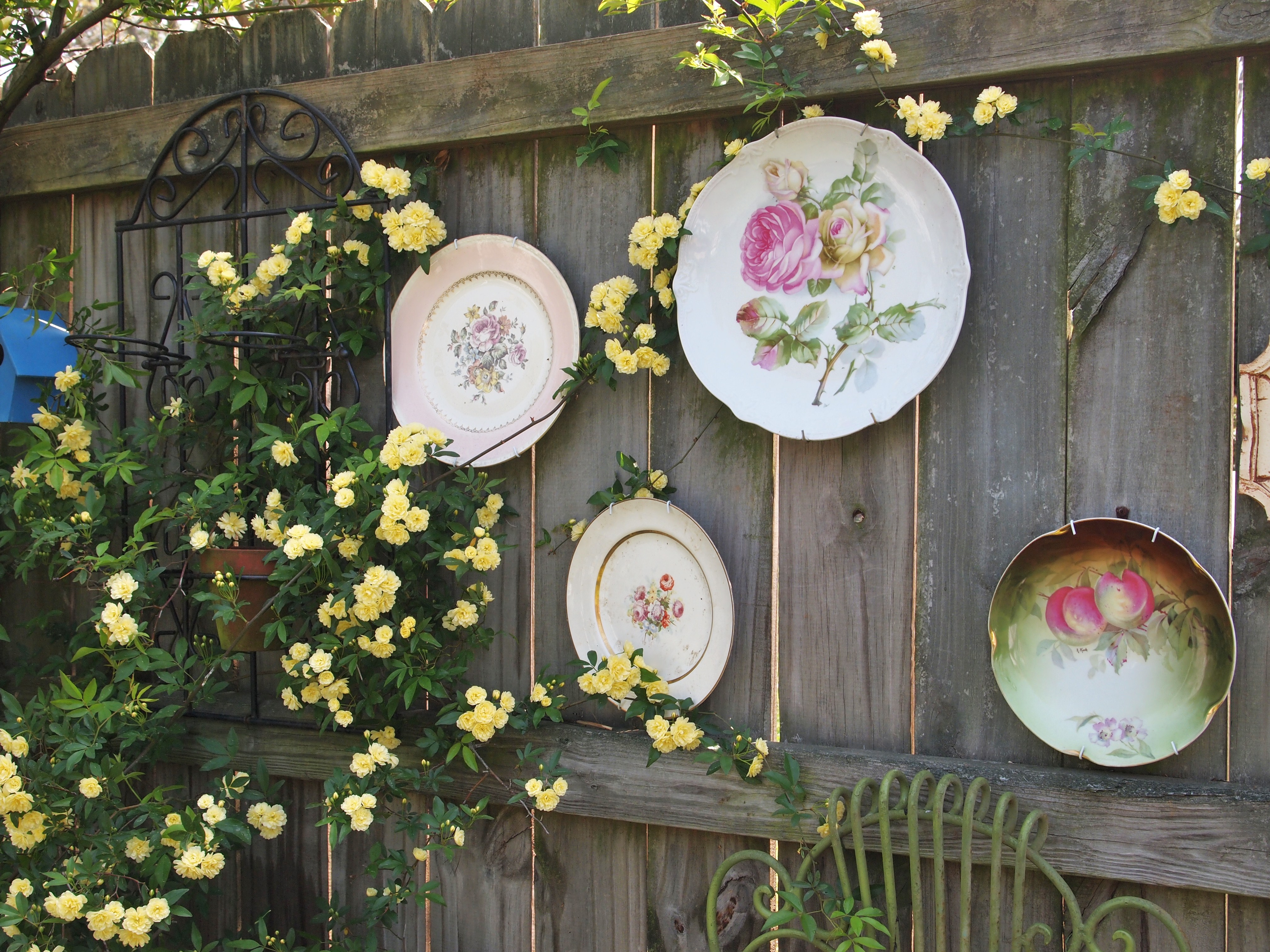 In my garden today roses starting seeds growing for Decoration pour jardin exterieur