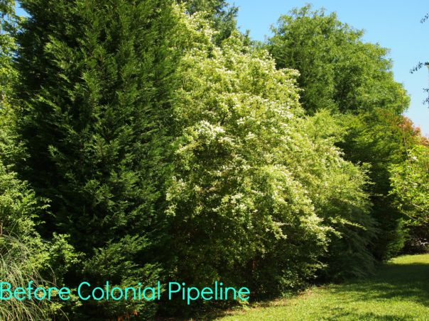 fence line before colonial pipeline