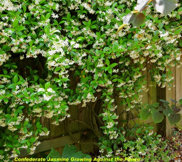 How to make an invisible trellis to grow vines on your fence