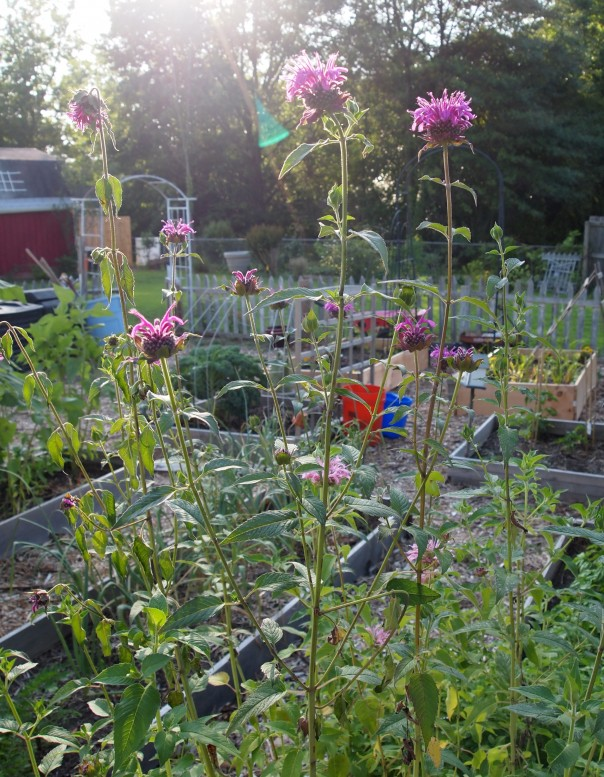 Garden technology how to plan your vegetable garden a for Plan your garden online