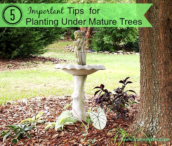 5 important tips for planting under mature trees that you should know