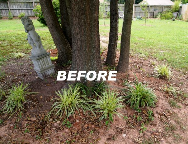 planting under mature trees - the before