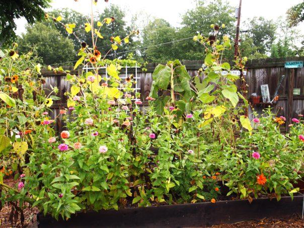 raised bed cutting garden