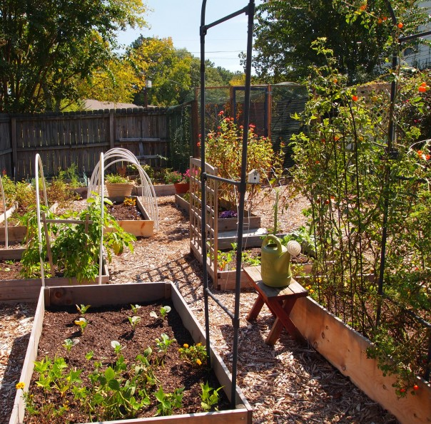raised bed with bush beans