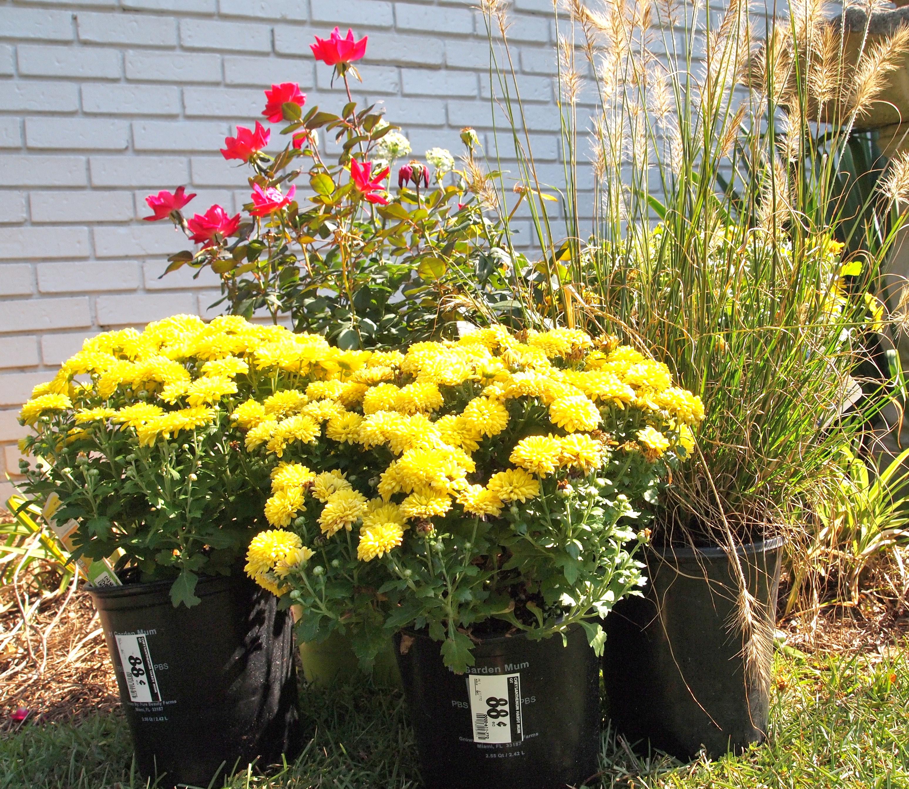 A Budget Friendly Garden Makeover A Cultivated Nest – Home Depot Garden Plants
