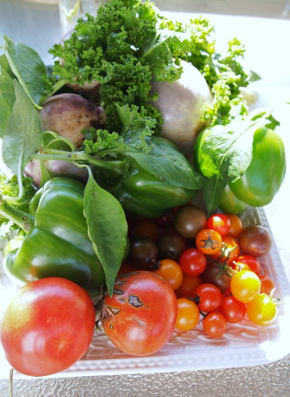 fresh garden vegetables