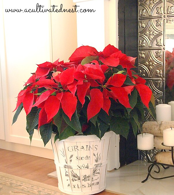 Easy project for Christmas or any time! DIY French Grain Sack Planter