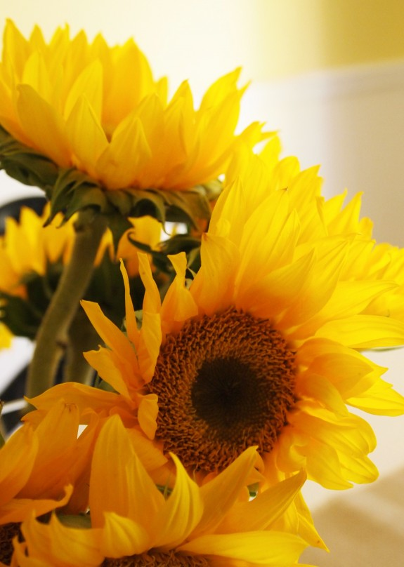 sunflowers via A Cultivated Nest