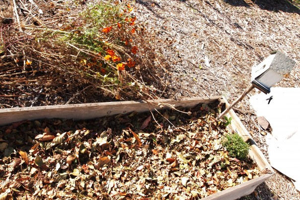 How to use leaves as mulch in the garden - leaf mulch in raised bed