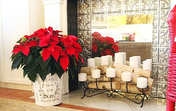 French grain sack planter and poinsettias