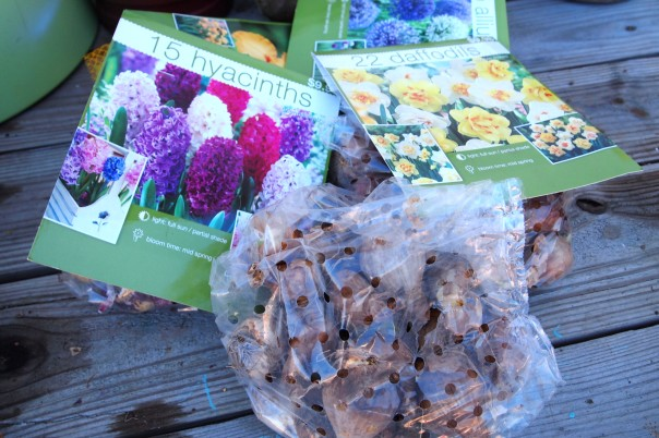 spring blooming bulbs in bags