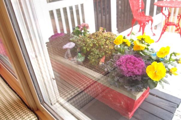 pansies in a windowbox