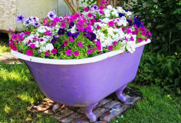 Lovely Petunias Growing In An Old Clawfoot Tub