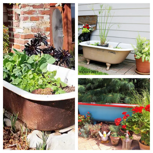 Using An Old Bathtub As A Container In Your Garden- Using an old bathtub as a container garden is easy, beautiful, and useful, too. They can hold a lot of plants and enhance your design! | upcycle bathtub, recycle bathtub, ways to use a vintage bathtub, #gardeningTips #gardenDIY #containerGarden #gardeningDIY #ACultivatedNest