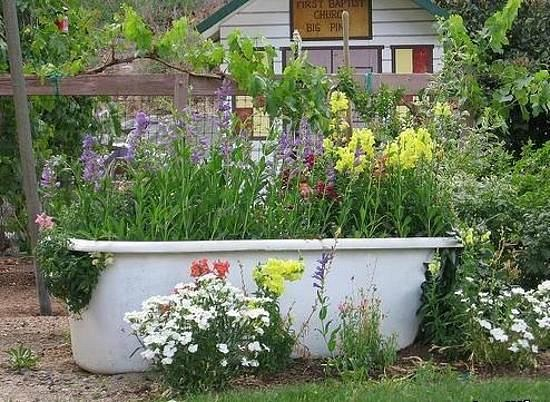 an old bathtub planted with flowers in the garden