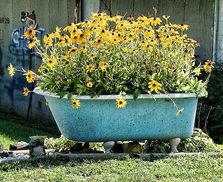 Superb I Love How This One Is Planted In One Type Of Flower. Via Fun Flower Facts  · An Old Bathtub Planted With Flowers In The Garden