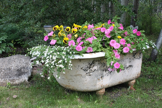 flowers planted in a bathtub