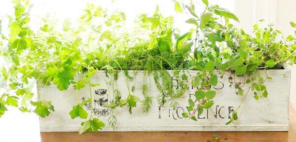 herbs de provence kitchen planter