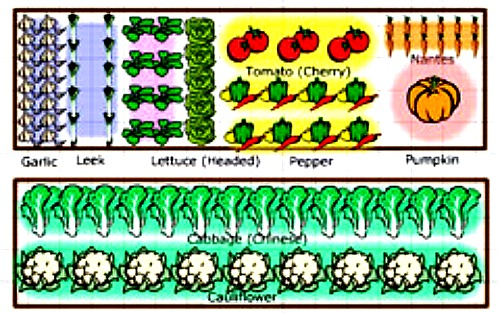 Online Vegetable Garden Planners   Use Technology To Create Your Most  Beautiful And Productive Vegetable Garden