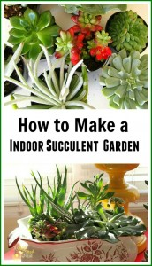 How To Make A Indoor Succulent Dish Garden