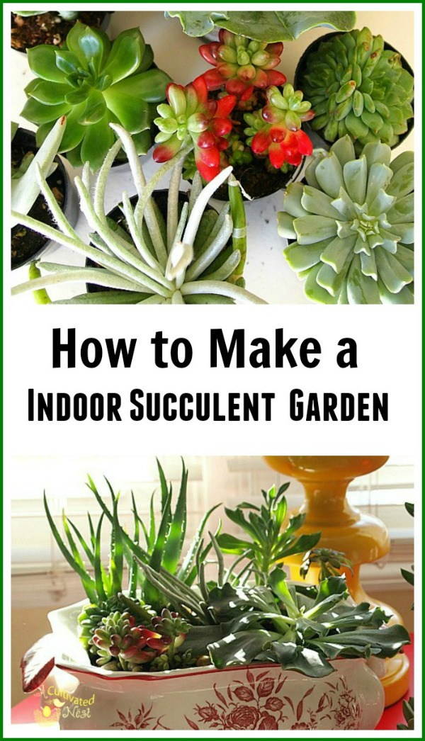 Genial How To Make An Indoor Succulent Planter. Add Life And Beauty To Your  Interiors With