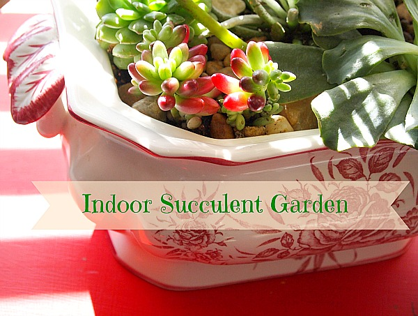 make a indoor succulent dish garden