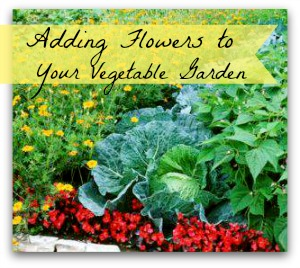 Delicieux How To Attract Pollinator  Adding Flowers To Your Vegetable Garden