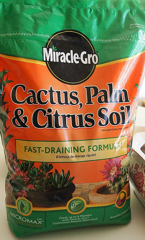 cactus soil for planting succulents