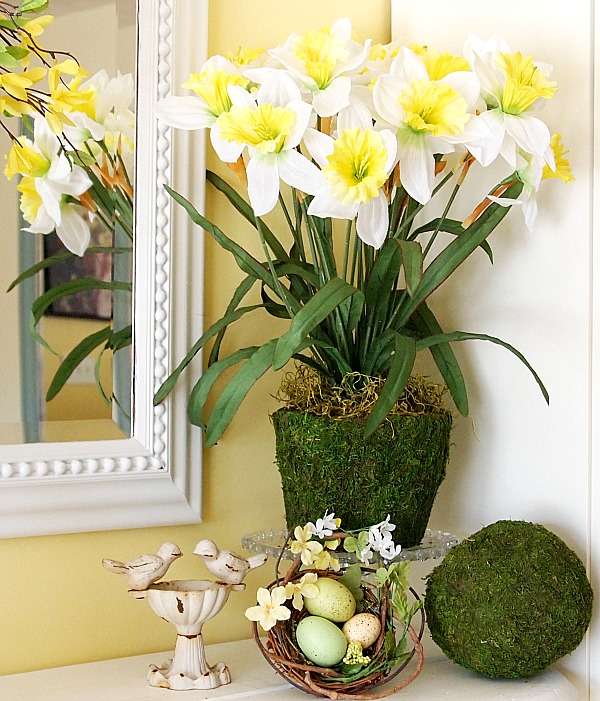 daffodils in a moss pot