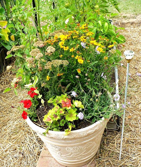 How To Attract Pollinators To Your Vegetable Garden And Why Thatu0027s  Important!