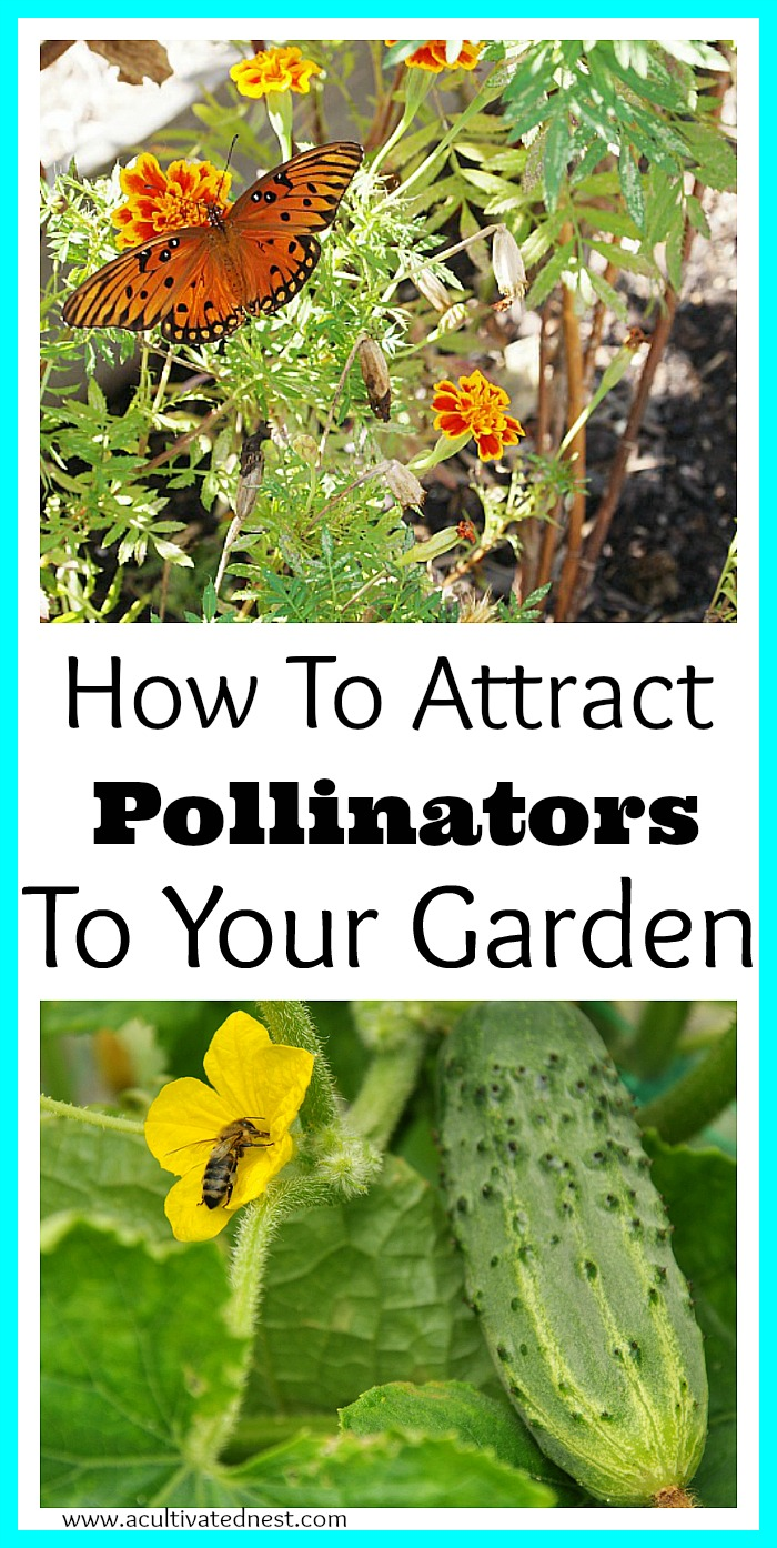 How To Attract Pollinators To Your Vegetable Garden and why that's important!